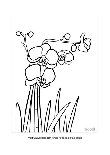 orchid drawing-4-lg.png