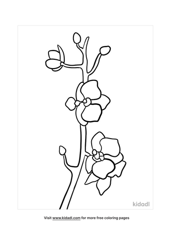 orchid drawing-5-lg.png