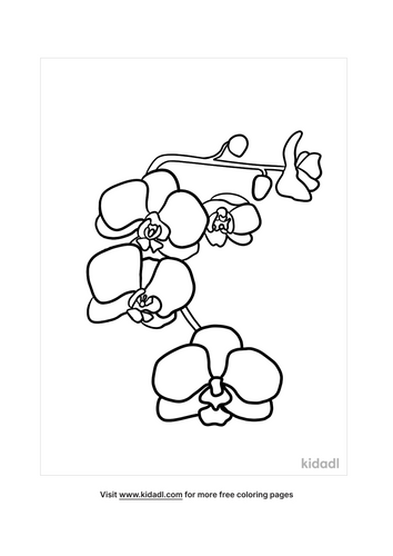 orchid picture-2-lg.png
