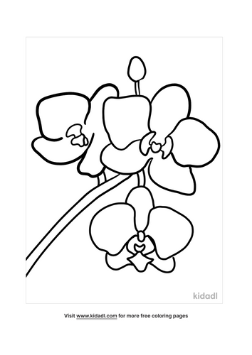 orchid picture-4-lg.png