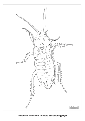 oriental-cockroach-coloring-page