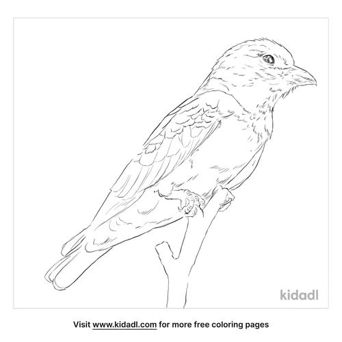 oriental-dollarbird-coloring-page