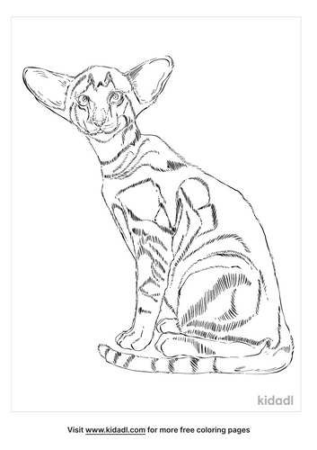 oriental-shorthair-coloring-page