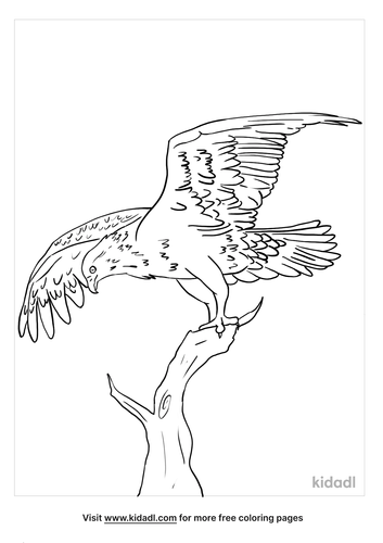 osprey coloring page_2_lg.png