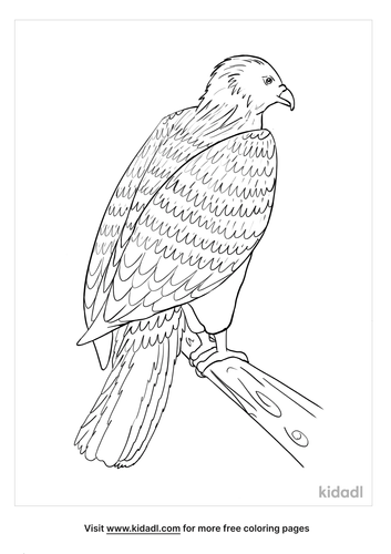 osprey coloring page_3_lg.png