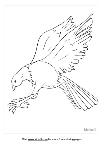 osprey coloring page_4_lg.png