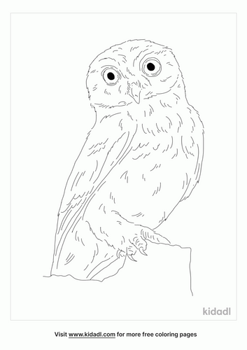 owlet-bird-coloring-page
