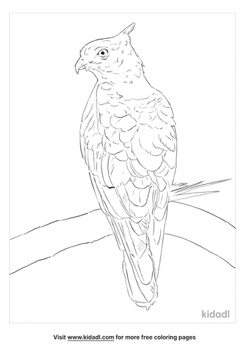 pacific-baza-coloring-page