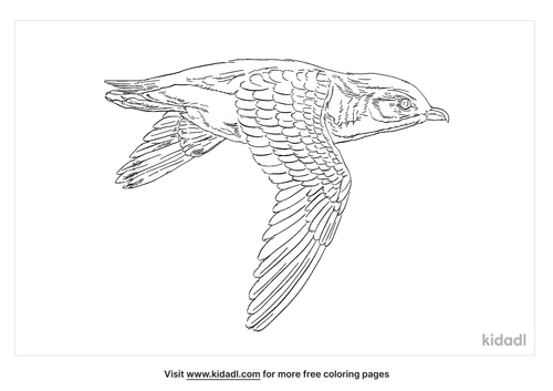 pacific-swift-coloring-page