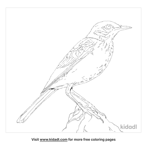 paddyfield-pipit-coloring-page