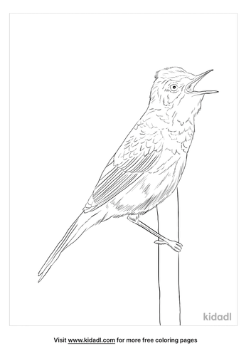 paddyfield-warbler-coloring-page