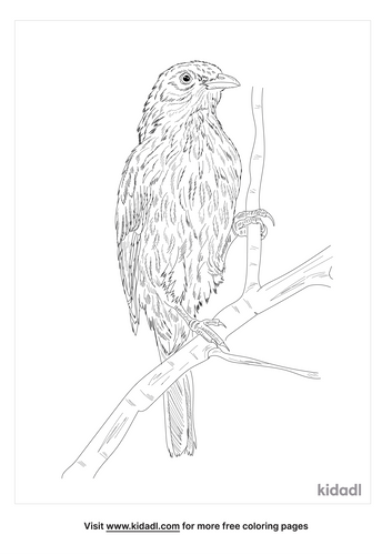 palmchat-coloring-page