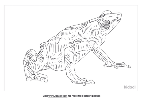 panamanian-golden-frog-coloring-page