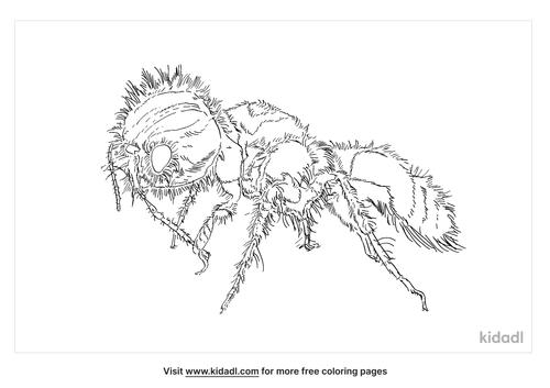 panda-ant-coloring-page