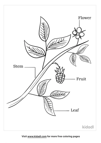 parts of a flower coloring page_3_lg.png