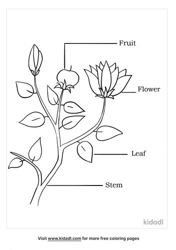 parts of a flower coloring page_4_lg.png