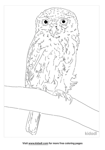 pearl-spotted-owlet-coloring-page