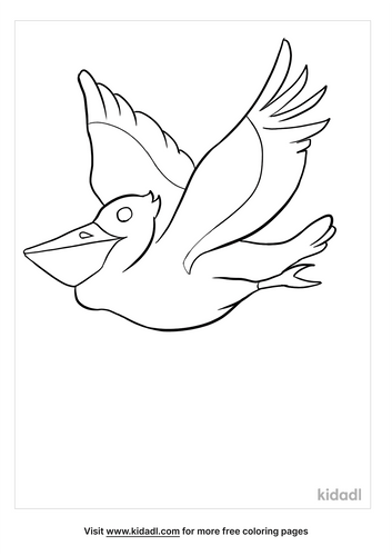pelican coloring page-5-lg.png
