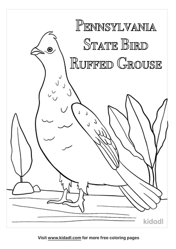 pennsylvania state bird coloring page-2-lg.png