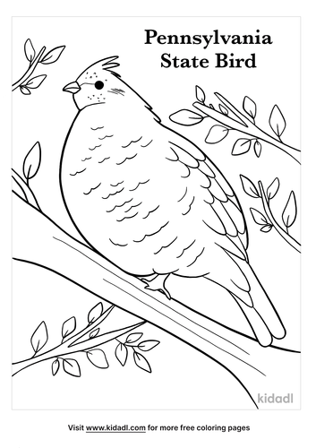 pennsylvania state bird coloring page-3-lg.png