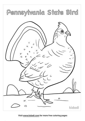 pennsylvania state bird coloring page-4-lg.png