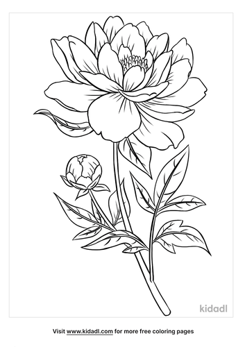peony coloring page-1-lg.png