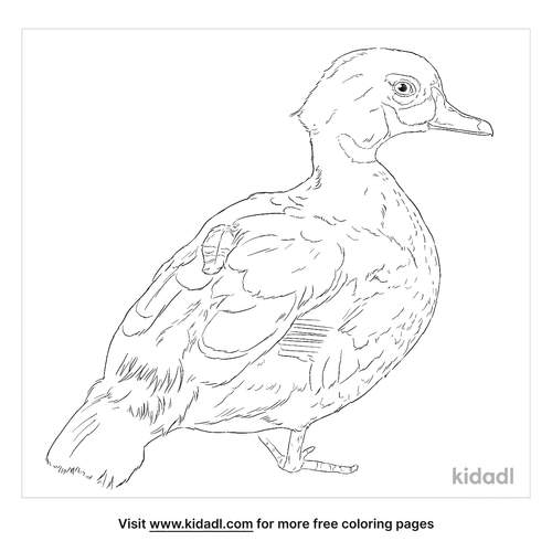 perching-duck-coloring-page