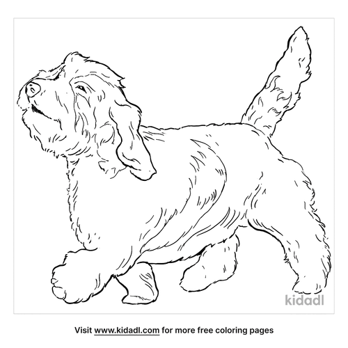 petit-basset-griffon-vendeen-coloring-page