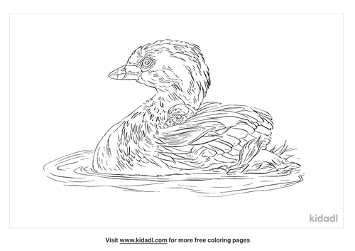 pied-billed-grebe-coloring-page