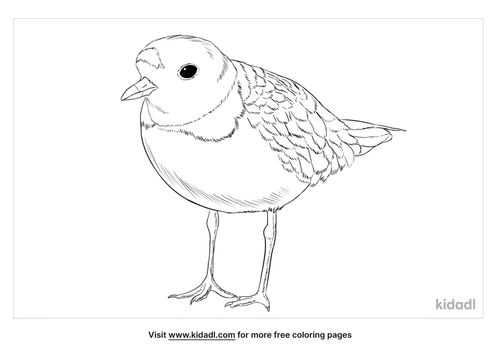 piping-plover-coloring-page
