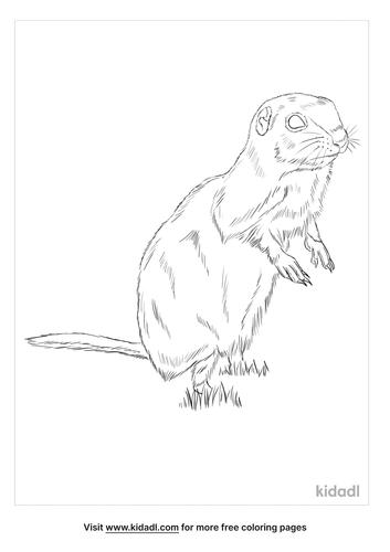 piute-ground-squirrel-coloring-page