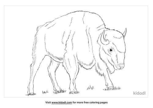 plains-bison-coloring-page