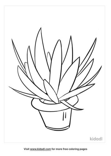 plant drawing-2-lg.png