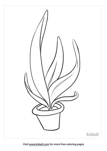 plant drawing-3-lg.png