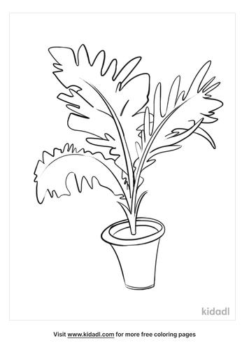 plant drawing-4-lg.png