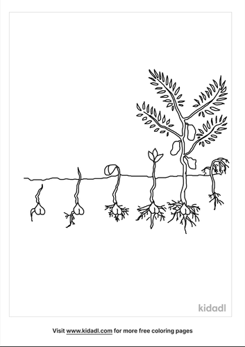 plant-life-cycle-coloring-pages-1-lg.png