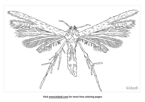 plume-moth-coloring-page