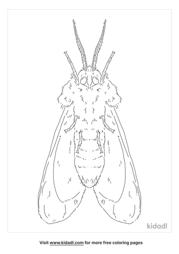 poodle-moth-coloring-page