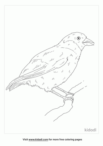 poouli-coloring-page