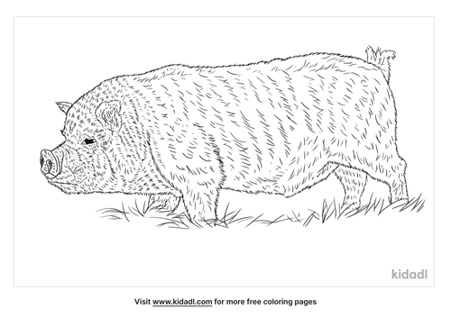 pot-belly-pig-coloring-page