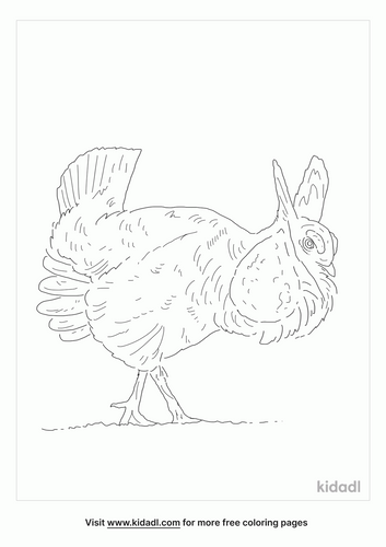 prairie-chicken-coloring-page