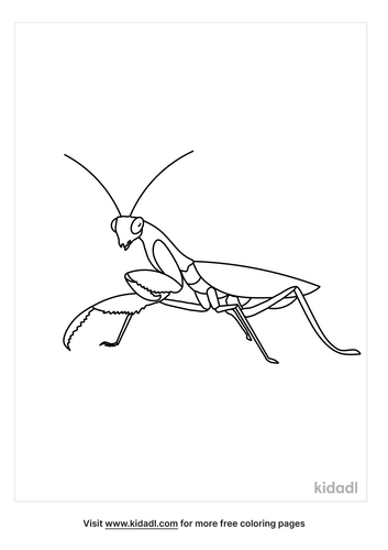 praying-mantis-coloring-pages-3-lg.png