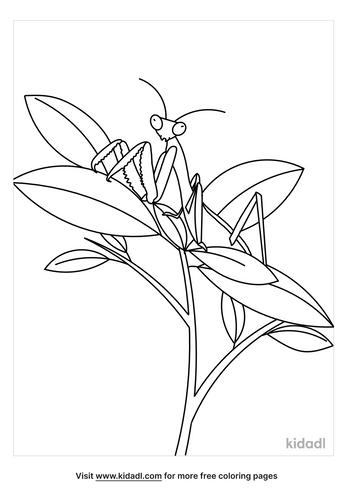 praying-mantis-coloring-pages-4-lg.png