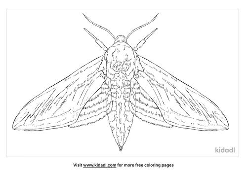 privet-hawk-moth-coloring-page