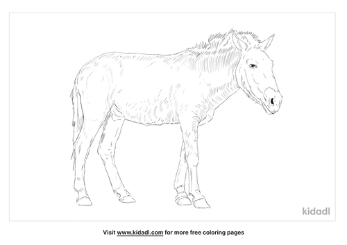 przewalskis-horse-coloring-page
