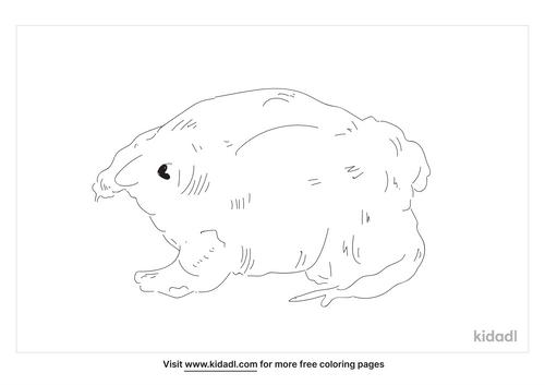 purple-pig-nosed-frog-coloring-page