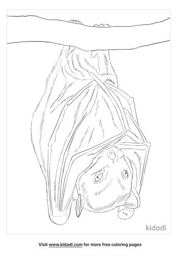 pygmy-fruit-bat-coloring-page