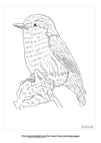 pygmy-nuthatch-coloring-page