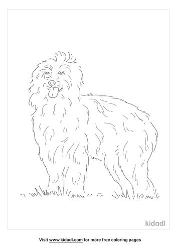 pyrenean-shepherd-coloring-page
