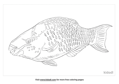 queen-parrotfish-coloring-page